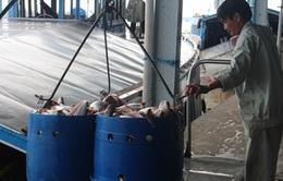 DOC vẫn chọn Indonesia là quốc gia thay thế để tính thuế cá tra