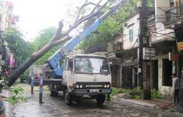 Hà Nội: Mưa giông làm cây cổ thụ bật gốc, đổ thẳng nhà dân