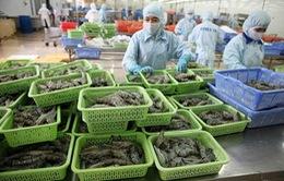 Xuất khẩu tôm vào thị trường EU tăng mạnh