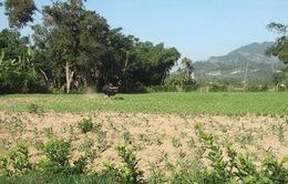 Quảng Nam: Bò tót húc chết 1 người, 4 người bị thương