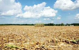 WB cảnh báo giá lương thực toàn cầu tăng cao