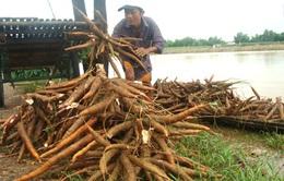 Hội thảo quốc tế Giảm thiểu tổn thất nông sản sau thu hoạch