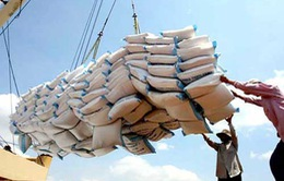 Xuất khẩu gạo năm 2014 dự báo có kết quả khả quan