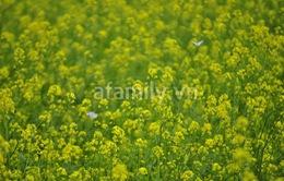 Đi chơi sớm ở 3 vườn hoa tuyệt đẹp tại Hà Nội