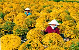 Lễ hội hoa xuân tại Sa Déc