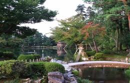 Ngất ngây với hoa anh đào Nhật Bản đầu năm