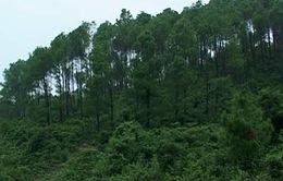 Phóng sự: Nhức nhối nạn lừa đảo, thu gom sổ đỏ đất rừng
