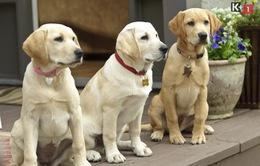 Marley & Me: The Puppy Years – Hòa vào thế giới của những chú cún