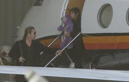 Brad Pitt đưa Pax Thiên sang Úc quảng bá phim