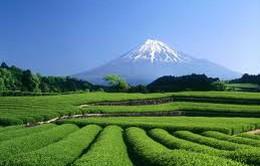 Shizuoka - ốc đảo bình yên của nước Nhật