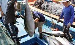 Cá ngừ Việt Nam xuất khẩu sang gần 140 nước trên thế giới