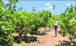 Người dân huyện miền núi Nam Đông khấm khá nhờ kinh tế vườn