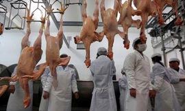 Trung Quốc điều tra chống bán phá giá thịt gà Brazil