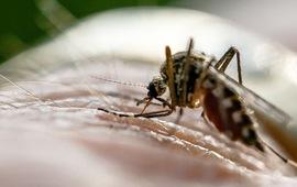 Cảnh báo nguy cơ kháng thuốc sốt rét tại châu Phi
