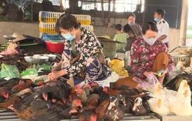 Cảnh giác cúm A (H5N8) từ gia cầm lây sang người