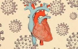Nghiên cứu mới về mối liên hệ giữa bệnh tim và bệnh nhân COVID-19