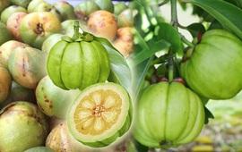 Bí quyết giảm cân an toàn từ thảo dược tự nhiên
