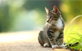 Người phụ nữ bị nhiễm bệnh đậu bò hiếm gặp từ mèo cưng