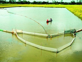 Developing the Mekong Delta sustainably in response to climate change