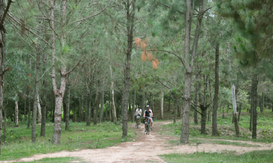 Phú Yên: Phê duyệt dự án bảo vệ và phát triển rừng phòng hộ, rừng đặc dụng