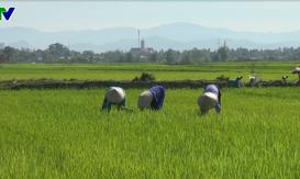 Nông dân miền Trung - Tây Nguyên phấn khởi xuống đồng đầu năm