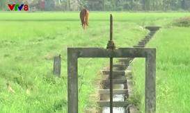 Người dân Quảng Trị khoan ruộng lấy nước