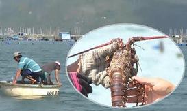 Phú Yên: Hội thảo quan trắc cảnh báo môi trường nuôi tôm hùm