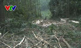 Phát hiện vụ khai thác rừng trái phép ở Phú Ninh, Quảng Nam