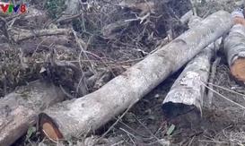Xác định chủ mưu vụ phá rừng và lấn chiếm trái phép đất rừng ở Đà Lạt