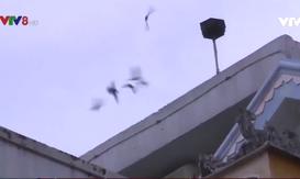 Thừa Thiên - Huế rà soát quy hoạch nuôi chim yến trong khu dân cư