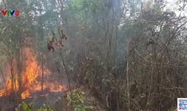 Quảng Trị: Nguy cơ cháy rừng trong thời điểm nắng nóng kéo dài