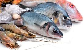 Khi nào có thể cho các bé ăn hải sản?