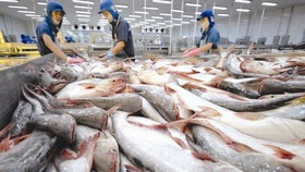 Tra fish exports to US, China decline