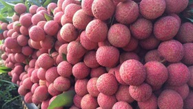 Japanese experts to inspect fresh lychee exports in Vietnam