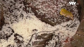 Vẫn còn tình trạng xả rác, rải tiền lẻ ở các lễ hội đầu Xuân