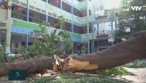 TP.HCM: Cây xanh đô thị và vấn đề an toàn trong mùa mưa