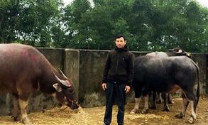 Hà Tĩnh: Bắt đối tượng thuê xe tải bắt trộm 8 con trâu