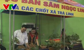 Khai mạc Hội chợ sâm Ngọc Linh và hàng nông sản lớn nhất Quảng Nam