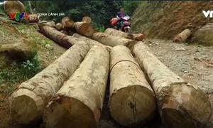 Tàn phá rừng phòng hộ ở Lào Cai