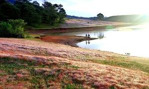 Mùa hội cỏ hồng Lang Biang dự kiến diễn ra vào cuối tháng 11