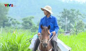 Cuộc sống khác biệt ở làng ngựa thồ