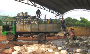 Kon Tum: Nhà máy chế biến mủ cao su gây ô nhiễm môi trường