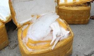 Thừa Thiên Huế: Bắt số lượng lớn heo sữa không rõ nguồn gốc