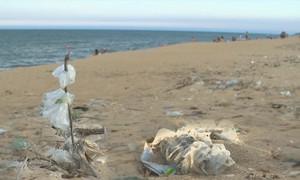 Túi ni lon tấn công bãi biển du lịch