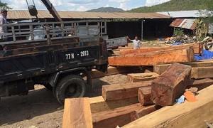 Gia Lai: Bắt khẩn cấp đối tượng mua bán, tàng trữ hơn 60 m3 gỗ không rõ nguồn gốc