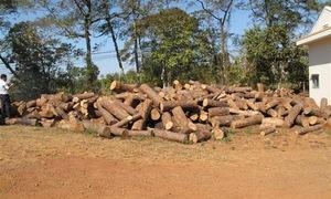 Đắk Nông: Khởi tố, bắt tạm giam ba đối tượng khai thác gỗ trái phép