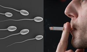 Hút thuốc làm giảm khả năng sinh sản và rối loạn tình dục ở nam giới