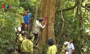 Lập lý lịch cho rừng để bảo vệ rừng