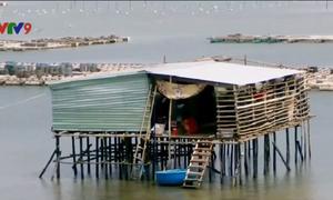 Khánh Hòa: Người dân ồ ạt dựng nhà sàn dày đặc trên vịnh Cam Ranh