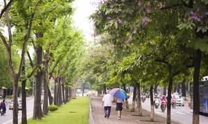 Ngày 17/6, mưa giảm nhanh tại Bắc miềnTrung